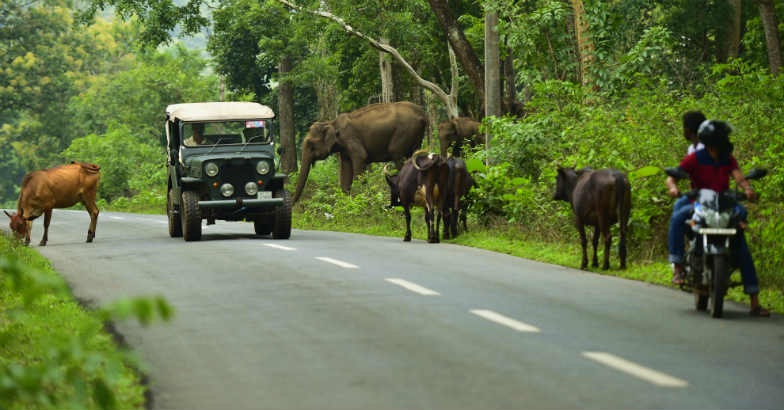 You are in Wayanad when