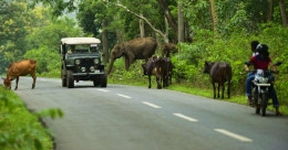 You are in Wayanad when...
