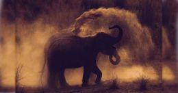 Wild tusker Padayappa raids plantation colony