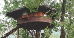 Tree houses that offer a real feel of the forest