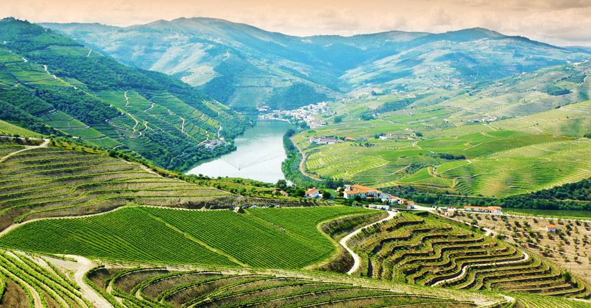 douro-wine