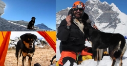 Dog makes record climb of a 23,497-ft Himalayan peak