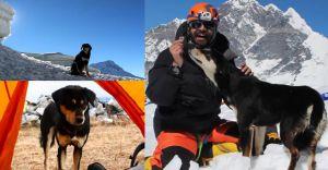 Dog makes record climb of a 23,497-ft Himalayan peak