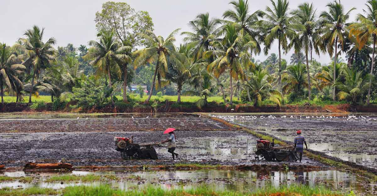 Paddy fields owners to get royalty