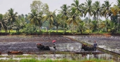 Paddy field owners to get royalty