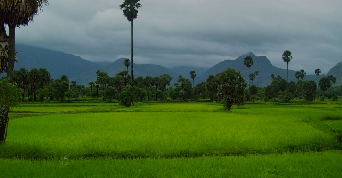 Farm tourism: A way of life in Kerala | Shutterstock