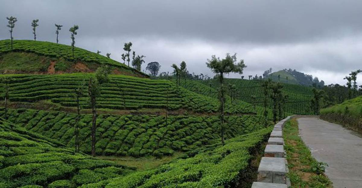 The view from Valparai and the tiger sanctuary