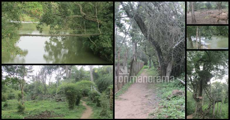 8 reasons to visit Coorg