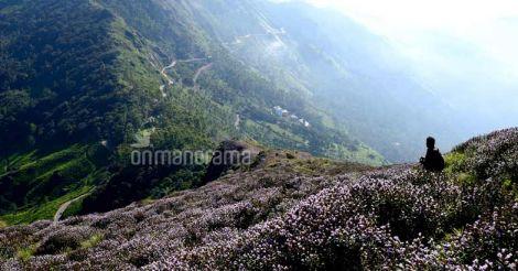 A succor to settlers: Govt decides to truncate Neelakurinji sanctuary