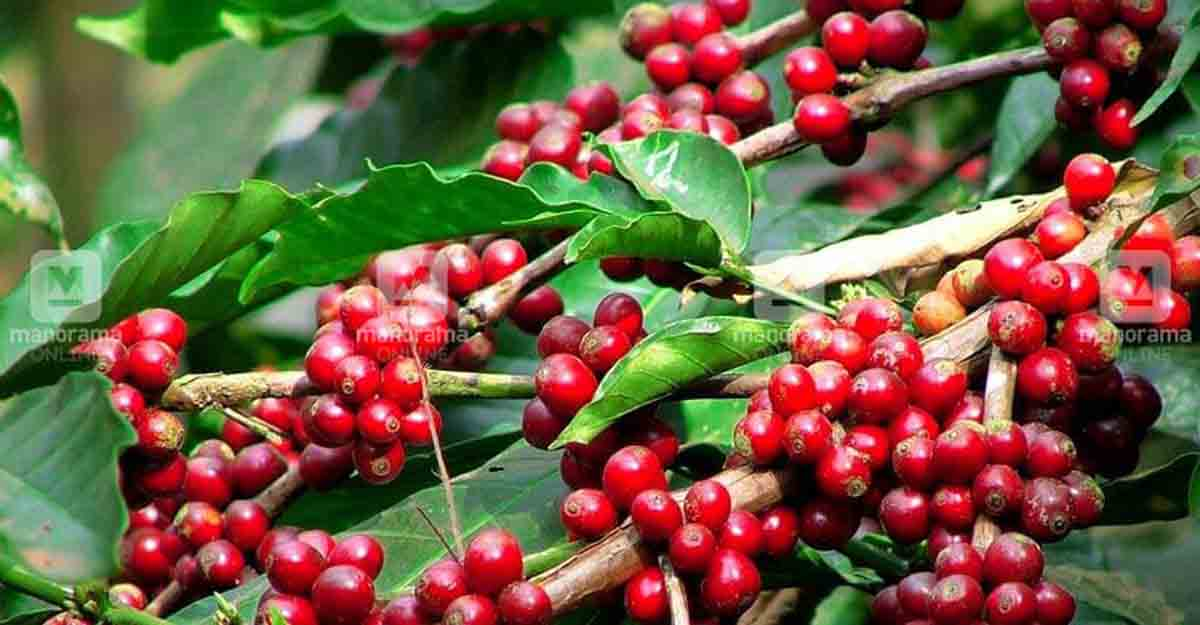 Best coffee plantation destinations to visit in India