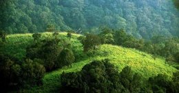 A vast, green canopy of silence