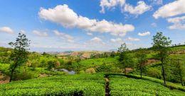 Take a refreshing trip to the heady Elappara village in Idukki