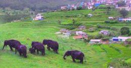 An encounter with elephants in near-deserted Munnar