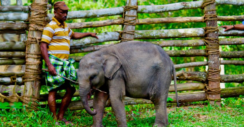 Elephant-Rehabilitation-Centre.jpg.image.845.440