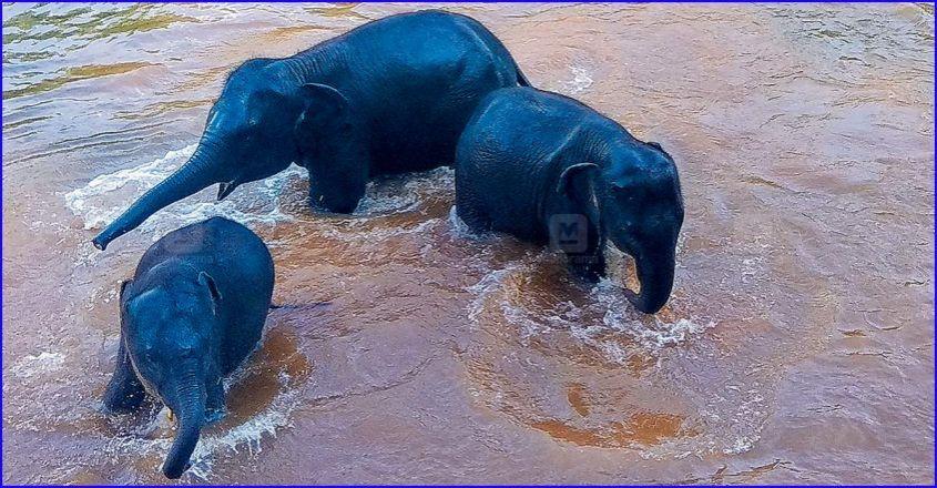 trivandrum-elephants-bathing.jpg.image.845.440.jpg.image.845.440
