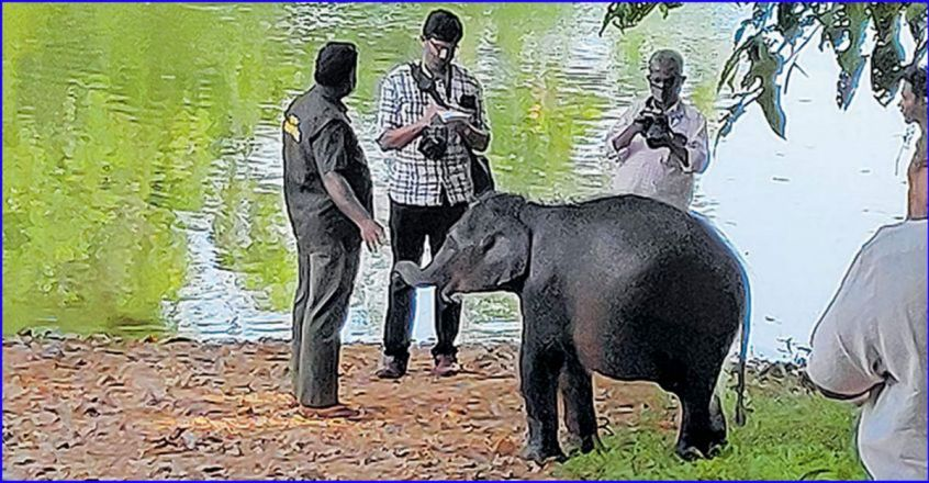 trivandrum-sreekutty1.jpg.image.845.440