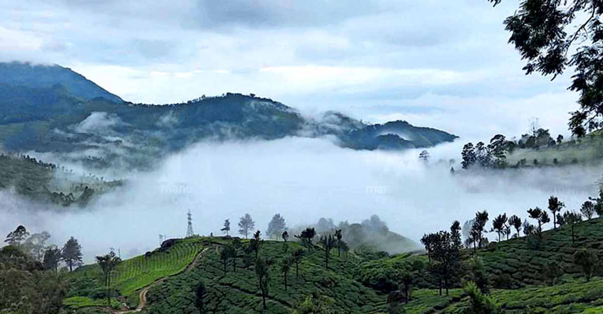 Travellers flood frosty Munnar for New Year festivities