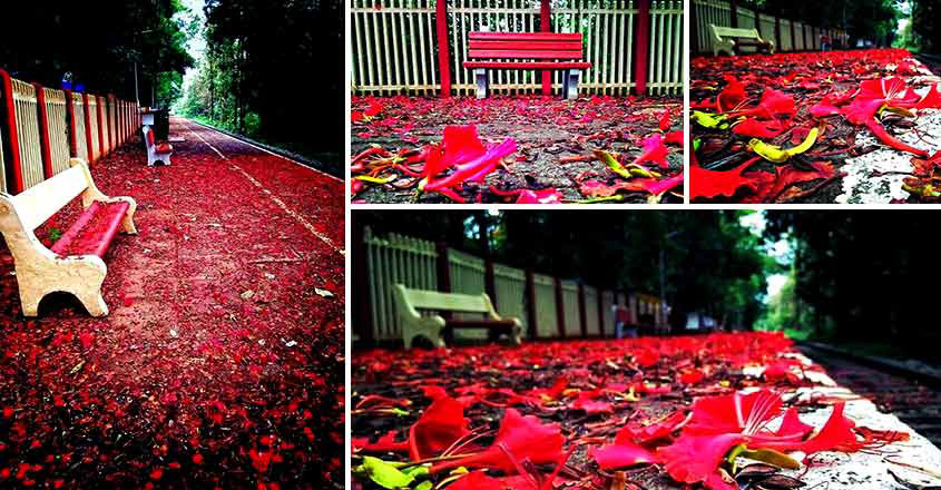 Gulmohar flowers give a different hue to Melattur railway station