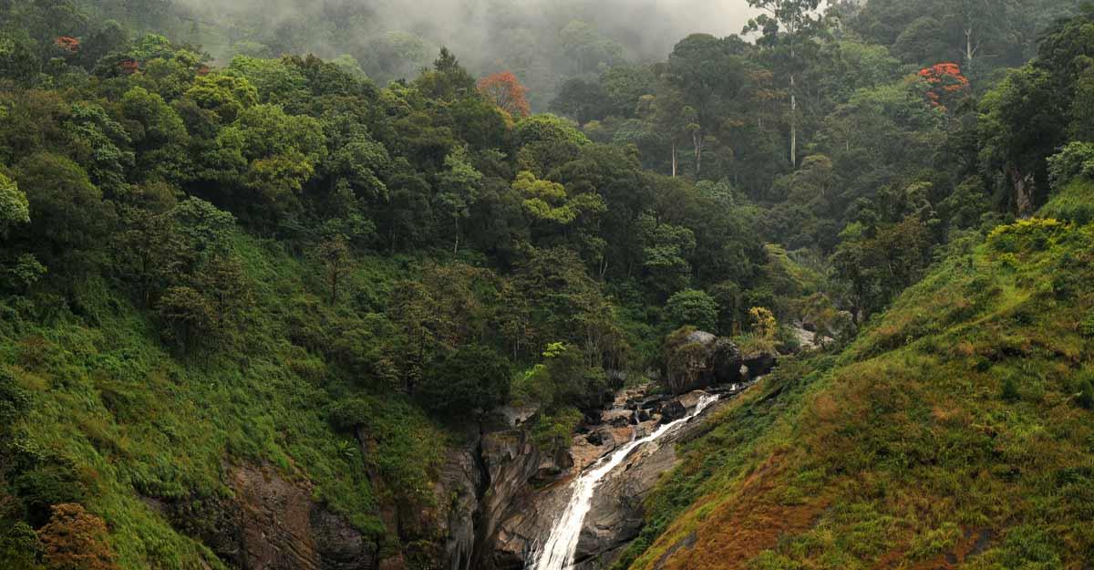 Eravikulam national park reopens for visitors after lockdown
