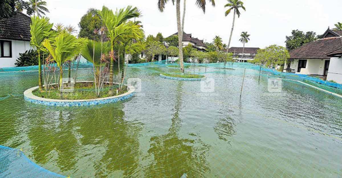 COVID-19 impact: Kumarakom resort breeds pearlspot in pool