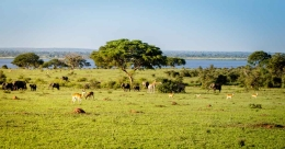 Uganda launches virtual Safari to kick-start tourism sector