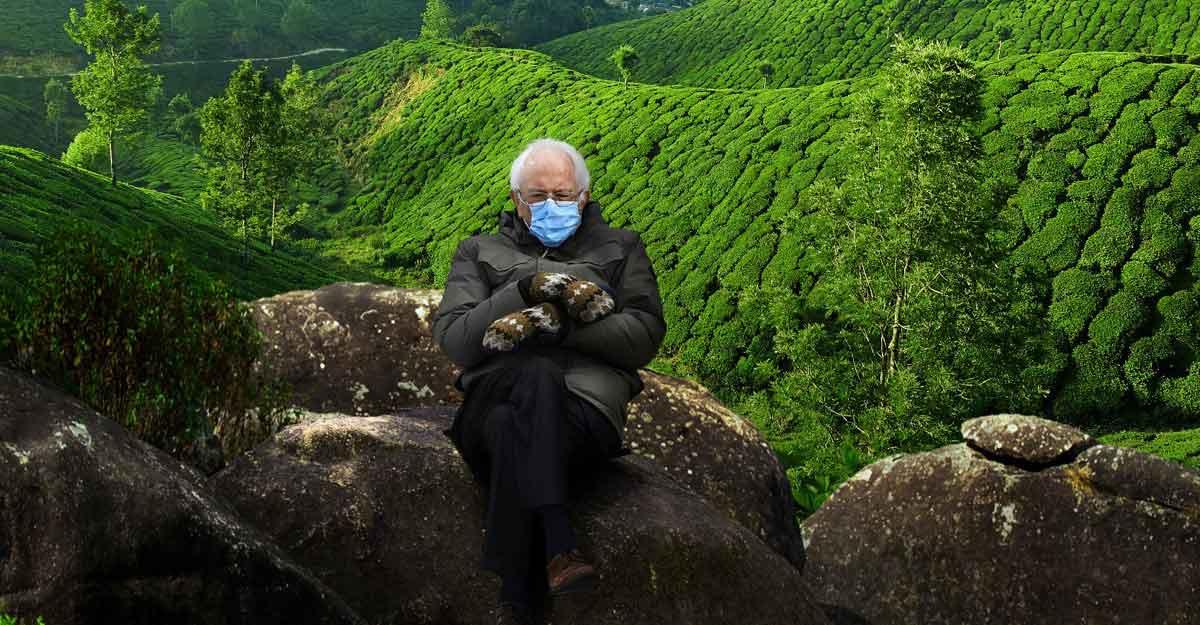 When 'Bernie Sanders reached Munnar': Kerala Tourism tries the mitten meme