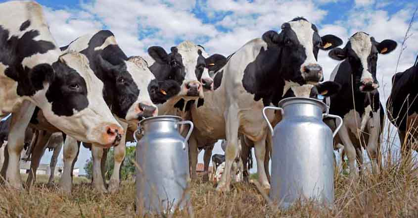 Kerala CM's home constituency to host 'global dairy village'