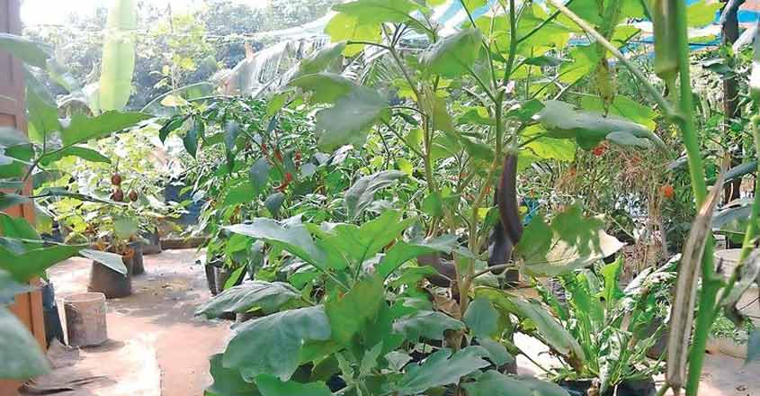 This housewife earns well by selling home-grown organic vegetables