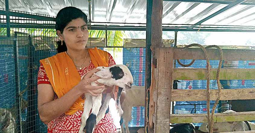 Here's how this Kottayam woman reaps profits through goat-rearing