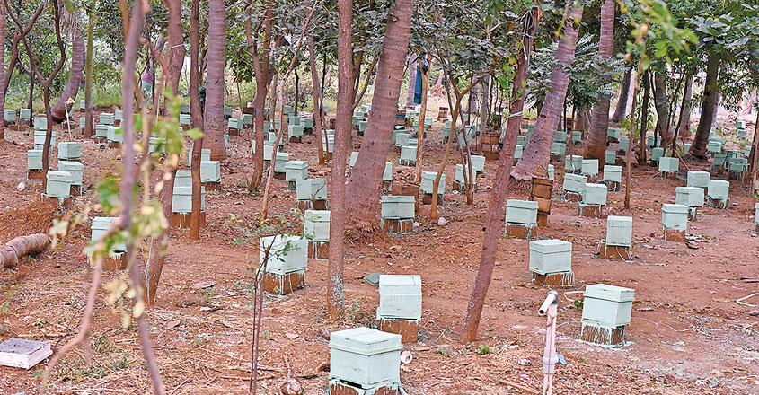 honey-farm